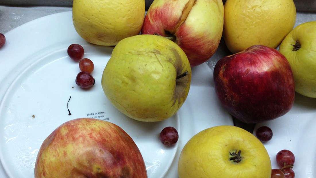 Haare, vergammeltes Obst oder Schimmel: Ekelhafte Überraschungen am Hotelbuffet.
