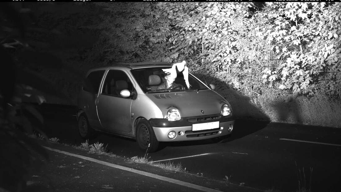 Taube verhindert Bußgeld: Die Kreispolizeibehörde Viersen kann einem Autofahrer wegen einer Taube die Geschwindigkeitsübertretung nicht nachweisen. Weder Fahrer noch Taube müssen das Bußgeld in Höhe von 105 Euro bezahlen.