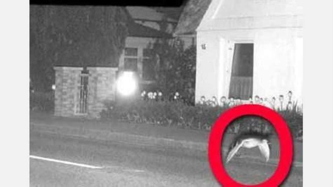 Der Polizei entgeht nichts: Auch zu schnelle Vögel werden kontrolliert.