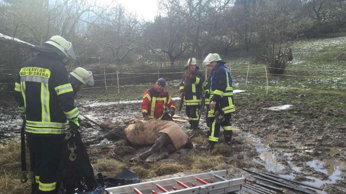 Tierrettung Rhein Neckar