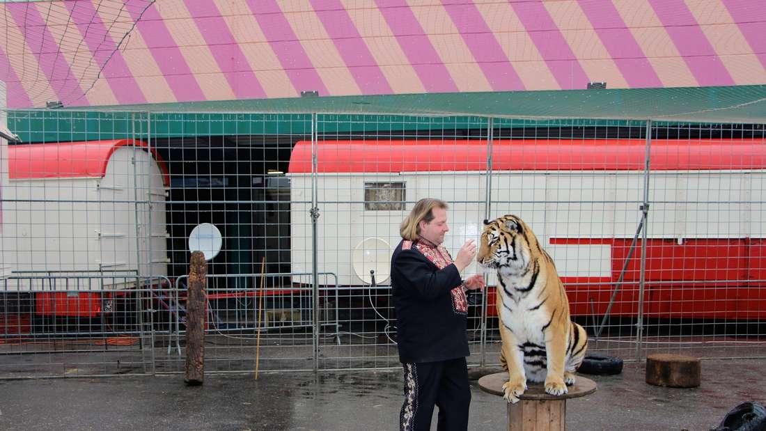 Der Circus Manuel Weisheit gastiert mit vier sibirischen Tigern auf einem Parkplatz