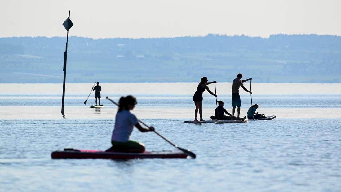 Vier Stand-up-Paddller fahren auf dem Bodensee.