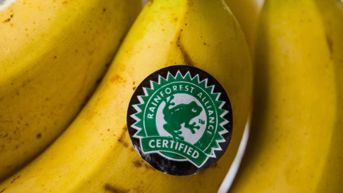 Bananen sind als Sattmacher bekannt - doch lange halten sie nicht vor. Im Gegenteil: Angeblich hat man schon wenige Stunden danach wieder Hunger.