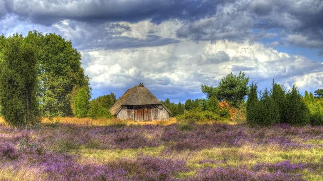 Traumhafte Stimmung bietet sich Urlaubern in der Lüneburger Heide.