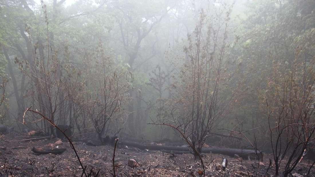 Insgesamt breiteten sich die Flammen im Unterholz über eine Fläche von rund 3.500 Quadratmetern aus.