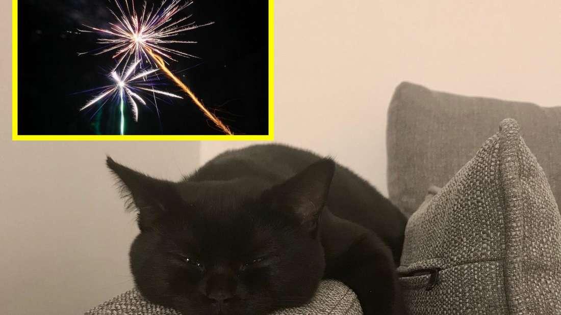 So entspannt kann die Katze auch während des Silvester-Feuerwerks rumliegen.