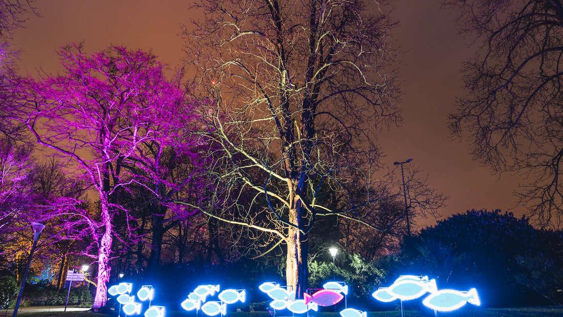So schön strahlen die Winterlichter im Luisenpark 2018