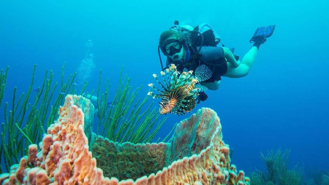 Tauchen in Belize.