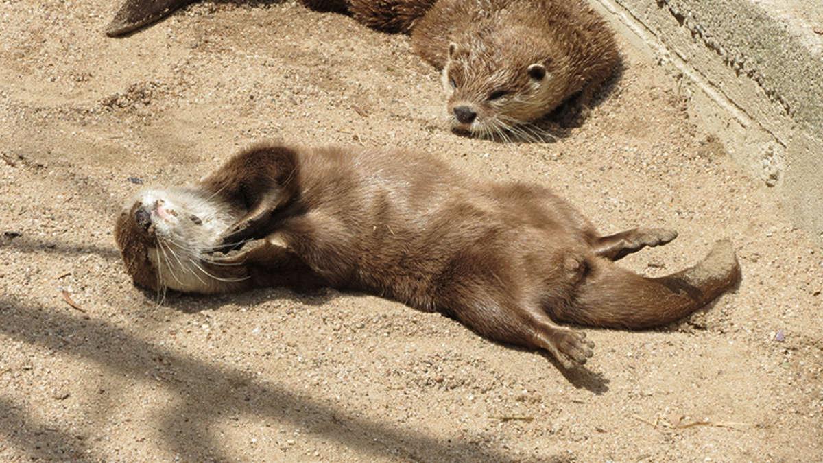 heidelberg tiere bei hitze im heidelberger zoo so genie en elefant otter und co den sommer. Black Bedroom Furniture Sets. Home Design Ideas