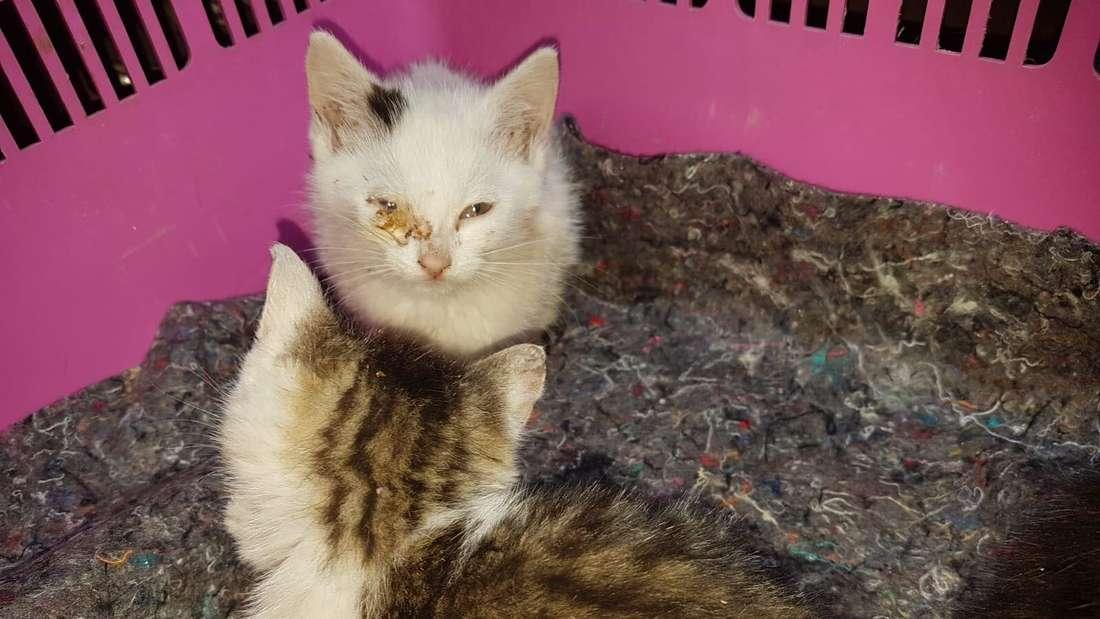 Zwei der drei überlebenden Kätzchen
