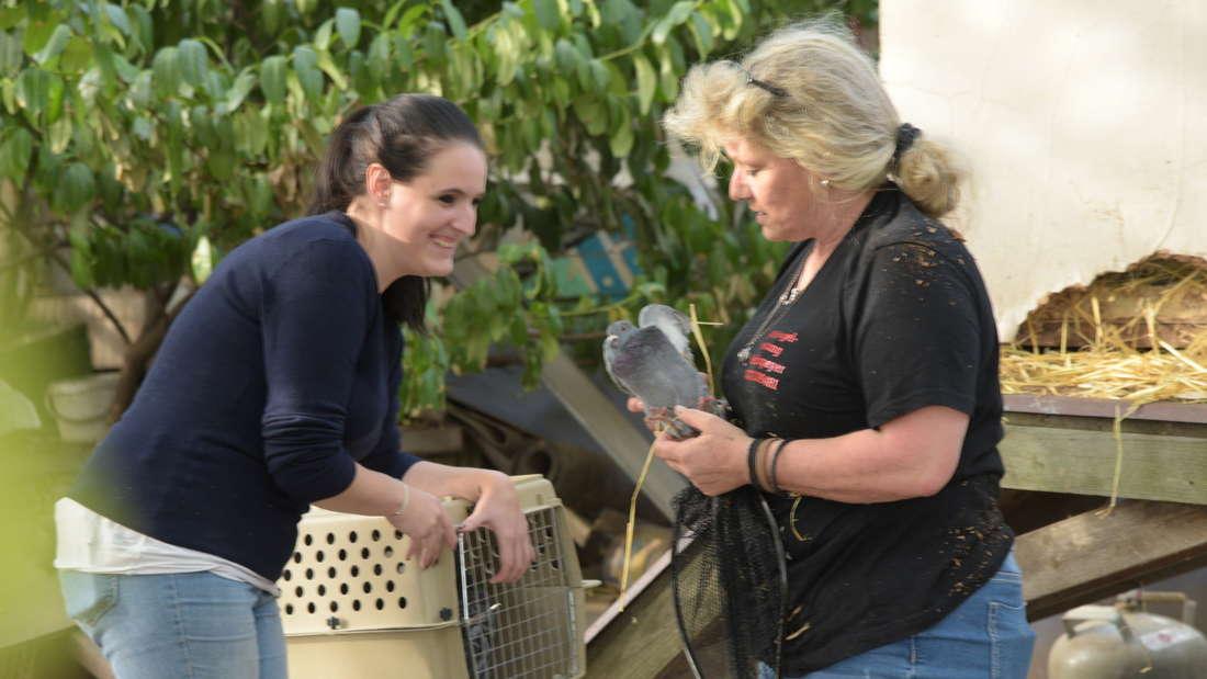 Polizei und Tierrettung beschlagnahmen Enten, Gänse und Tauben von Grundstück in Rohrbach.