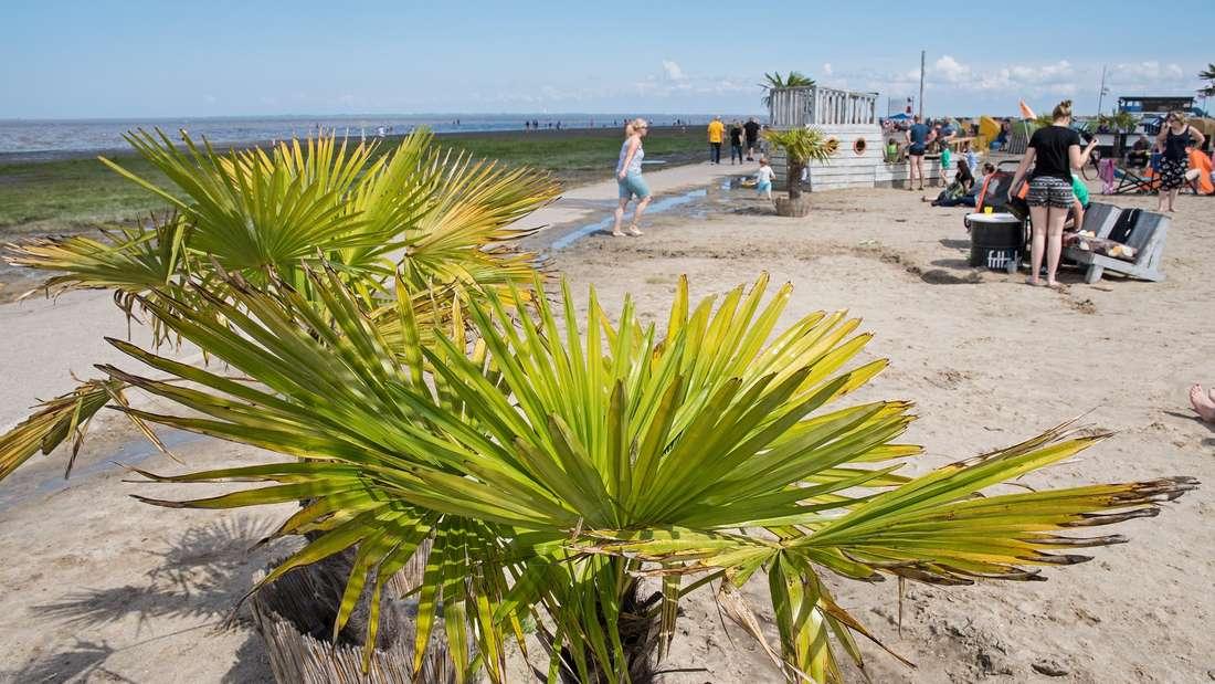 Sonnenschein an der Nordseeküste: Deutschland ist im Jahr 2019 in den Top 10 der besten Reiseziele vertreten.