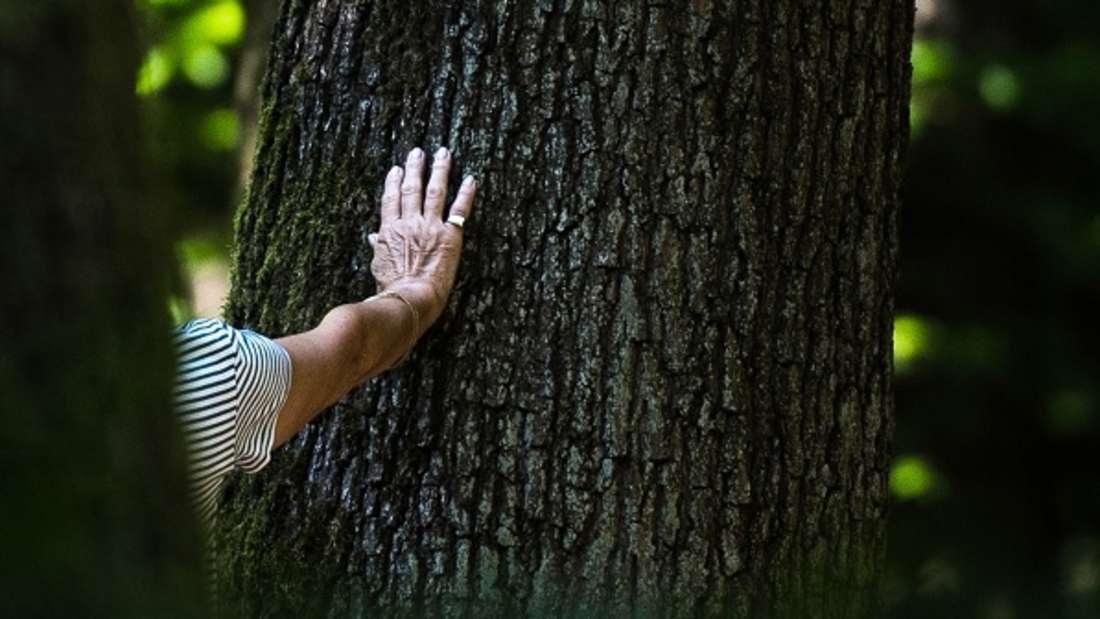 Ein Waldboden der sichtbar atmet - kann das sein?