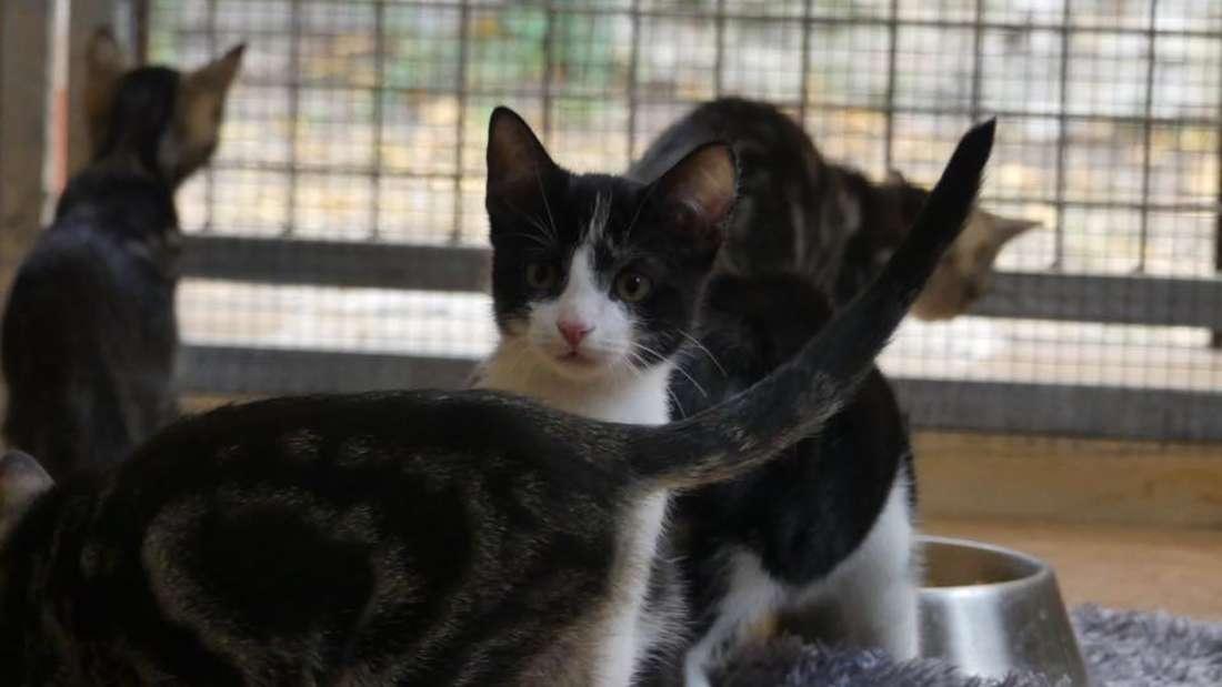 Eine der 21 Katzen im Tierheim Frankenthal