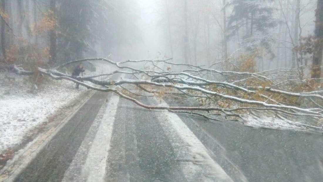 Ein schneebedeckter Baum blockierte am 12. November 2017 die Straße zwischen Königstuhl und Kohlhof