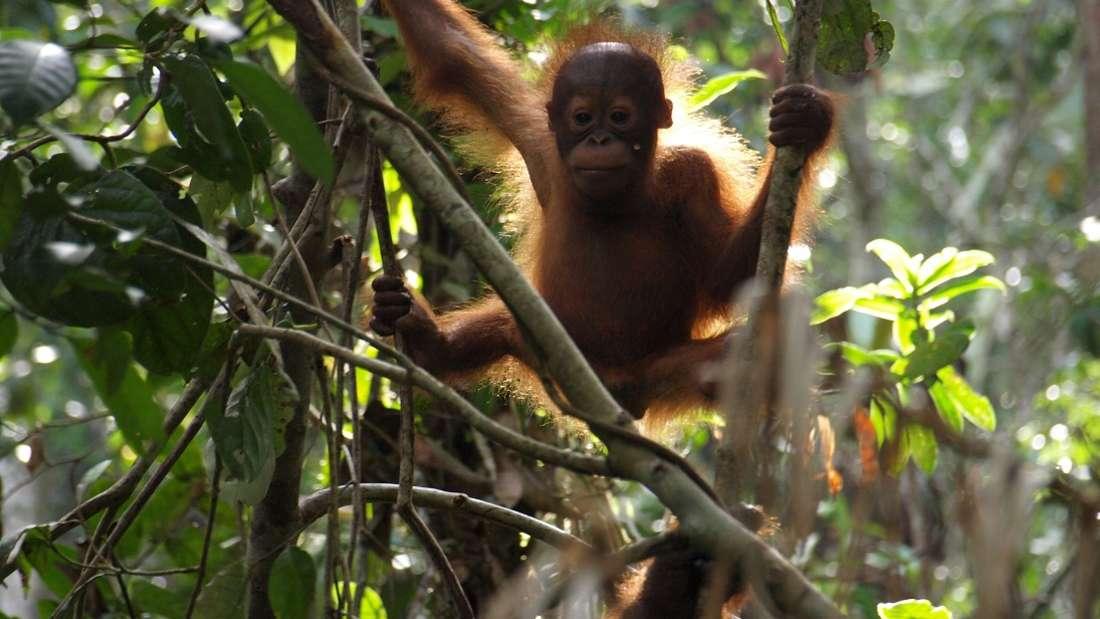Malaysia: Relaxen am Strand und Exkursionen durch den ältesten Regenwald der Erde