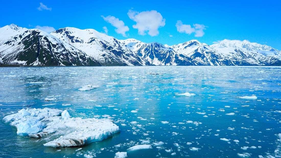 Im Juli mit dem Kreuzfahrtschiff durch die Natur Alaskas.