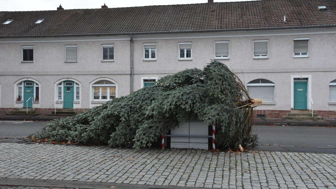 Im Pfaffengrund ist ein Tannenbaum auf den Marktplatz gefallen.