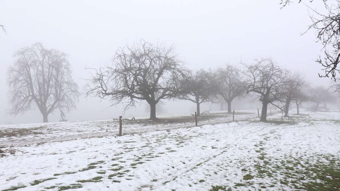 Bilder vom verschneiten Kohlhof am ersten Januar-Wochenende 2019