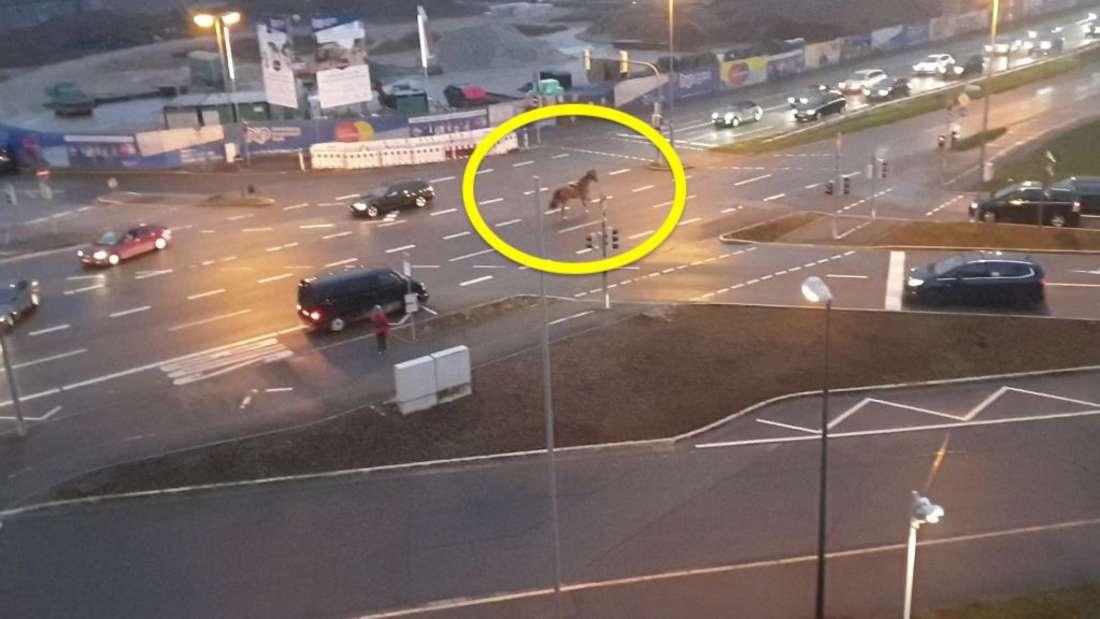 Ein Pferd rennt durch Heidelberg