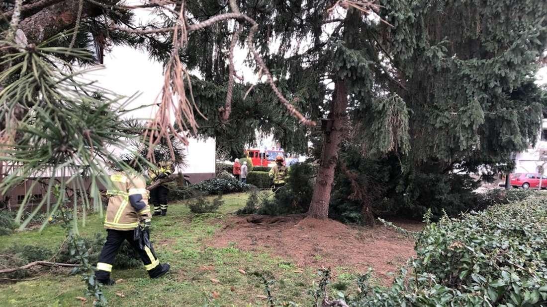 In Brühl reist der Sturm mehrere Bäume um.