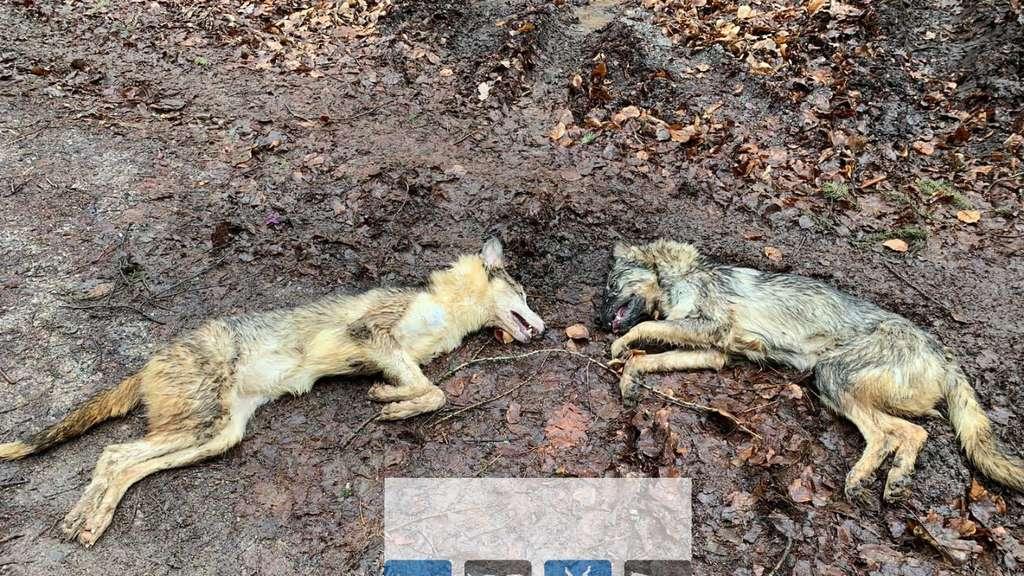 Tote Hunde