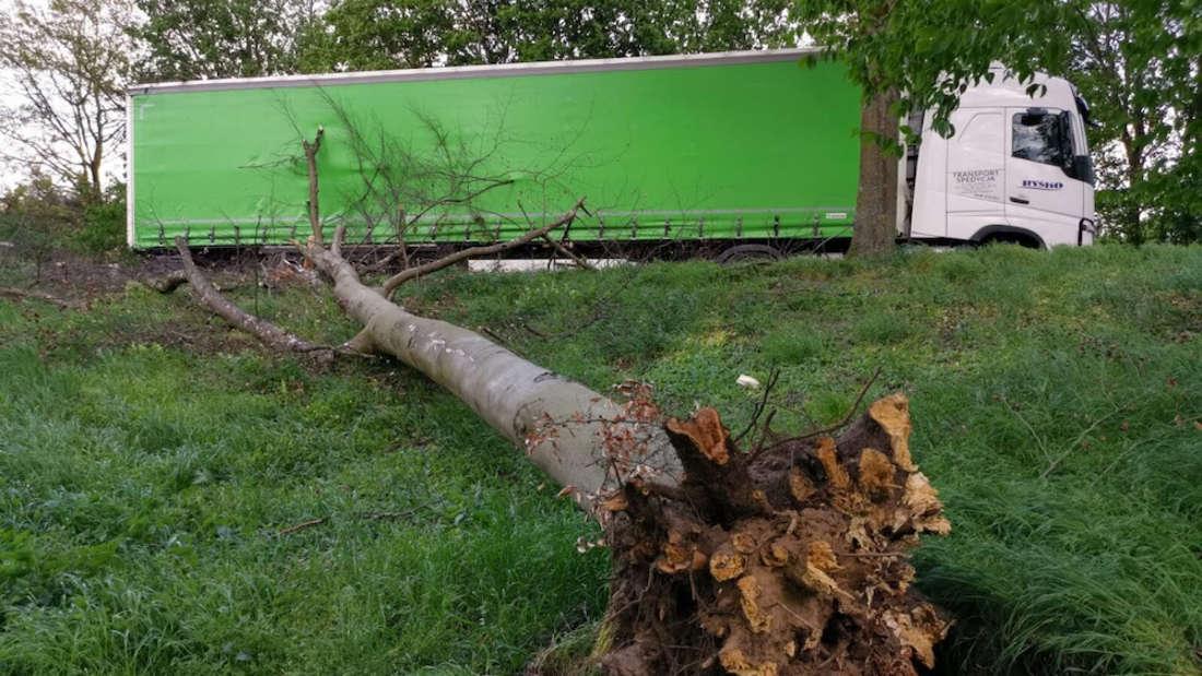 Großer Baum fällt auf A5 Rastplatz und trifft LKW bei Walldorf