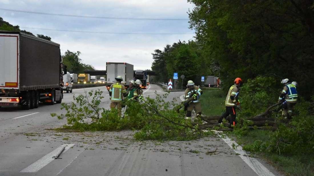 Baum stürzt auf A6 Hockenheim.