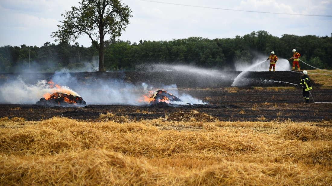 In Sandhausen stehen rund zwei Hektar Feld in Flammen.