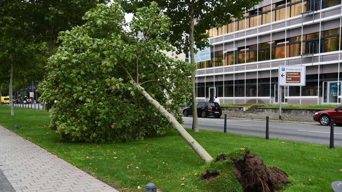 Ein Unwetter hinterlässt in Mannheim eine Spur der Verwüstung.