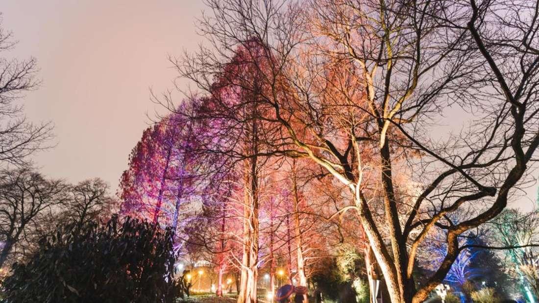 Die Winterlichter im Luisenpark (Archivfoto)