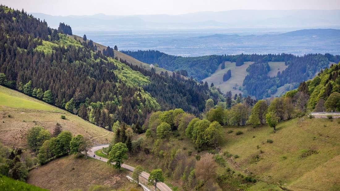 Coronavirus: Urlaub in Deutschland - die beliebtesten Reiseziele - der Schwarzwald