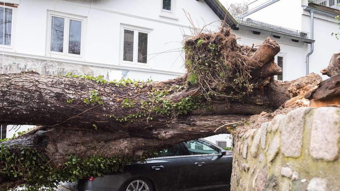 Entwurzelter Baum auf Auto.