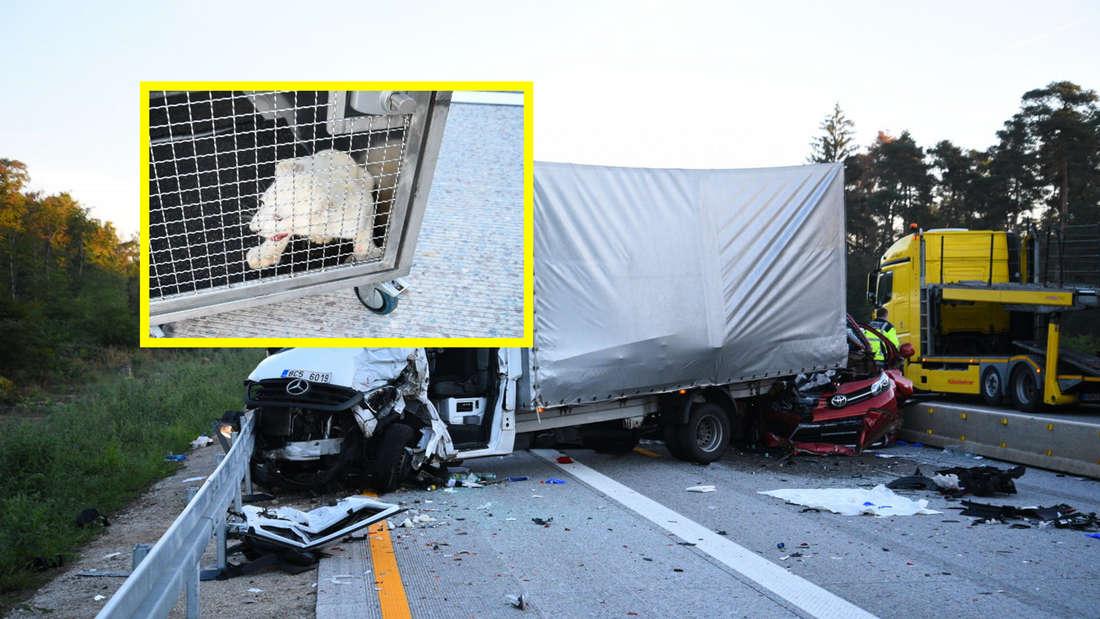 Schwerer Unfall auf der A5 bei Kronau – Löwenbaby in einer Holzbox entdeckt.