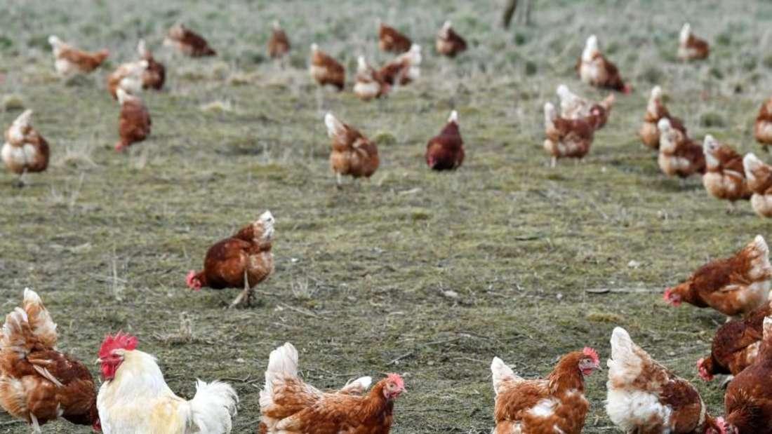 Eier aus Freilandhaltung und Öko-Erzeugung