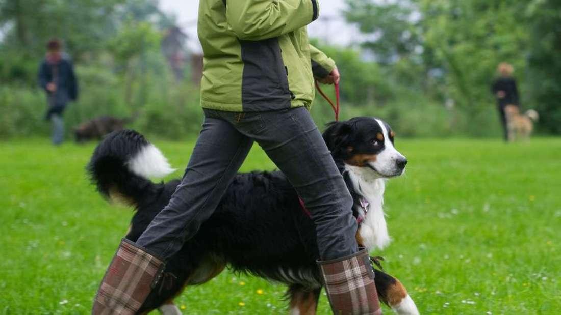 Die Landesregierung in Baden-Württemberg will den sogenannten Hunde-Führerschein einführen. (Symbolfoto)