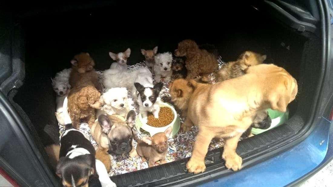 Hundetransport mit Welpen gestoppt