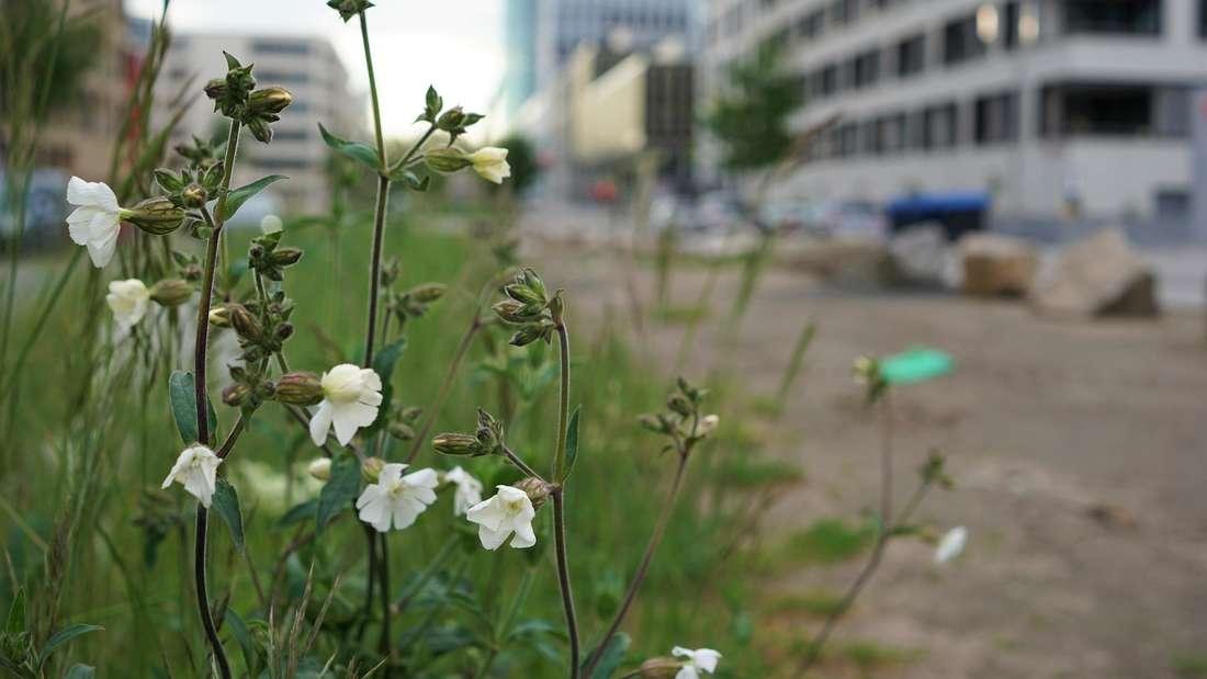 Heidelberger Start-up: Wildblumen-Aktion am Weltbienentag