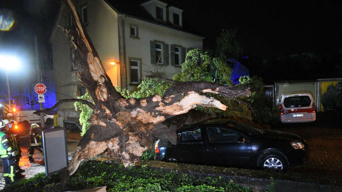 In der Leimener Hildastraße krachte ein Baum auf ein Auto.